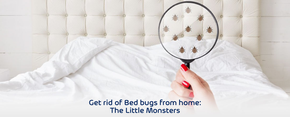 how to get rid of bed bugs in mattress