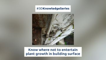 Know where not to entertain plant growth in building surface