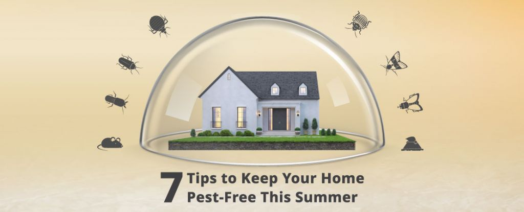 Indian summers are synonymous with notorious pest problems. This article tells you how to keep your house pest-free in the easiest possible ways.